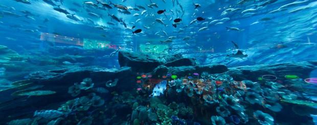 Dubai Mall Aquariam