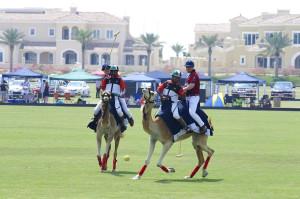 Polo on a camel